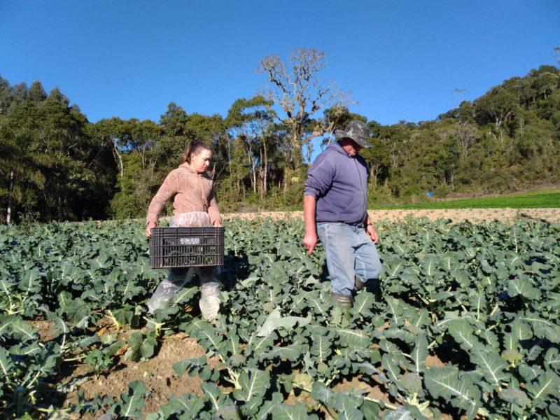 O casal de agricultores Adriana e Gilberto trabalha junto no campo desde a época do namoro – Foto: Nícolas Horácio/ND