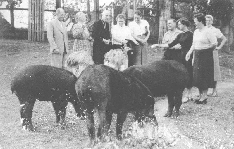 O Zoo Pomerode é o maior BioParque de Santa Catarina – Foto: Arquivo/Zoo Pomerode