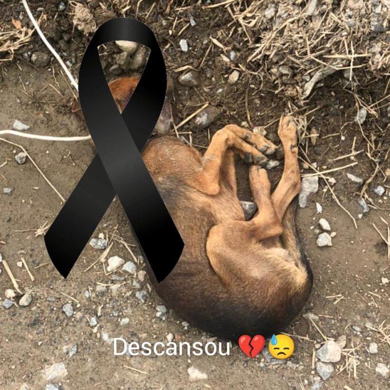 Cachorro morreu após ser encontrado amarrado aos trilhos de trem – Foto: Frada/Divulgação