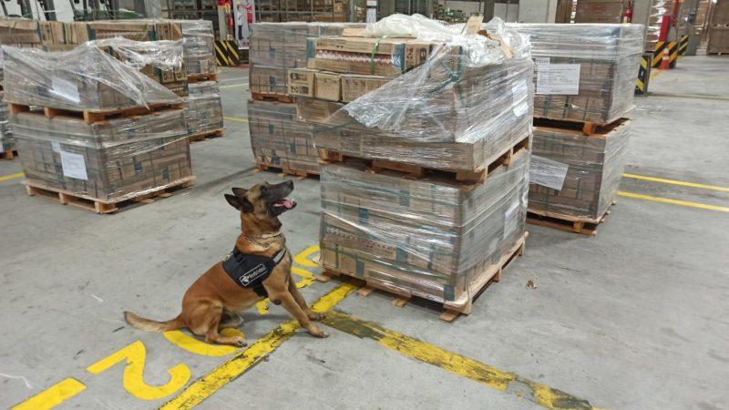 Cão de faro Enzo foi o responsável por encontrar 543 kg de cocaína no terminal de cargas de Navegantes