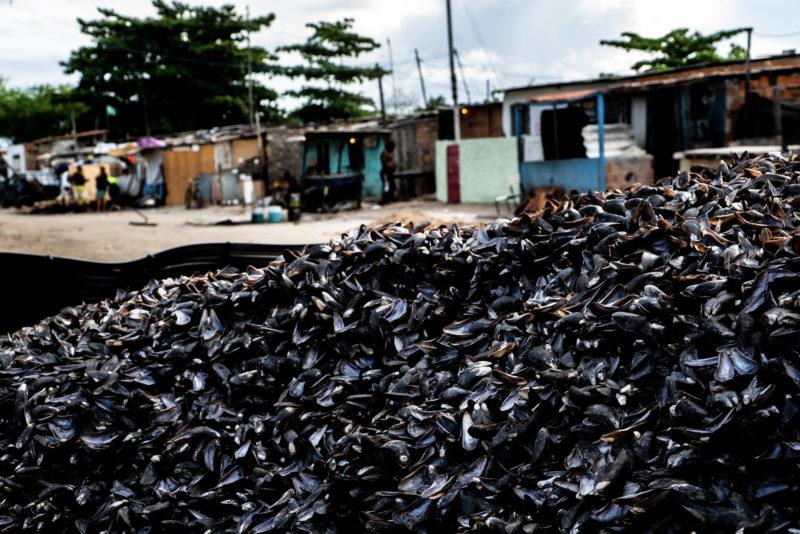 Casca Sururu – Foto: Portobello/Divulgação
