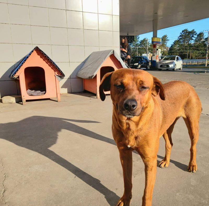 cães de rua são abrigados em casinhas de posto de gasolina