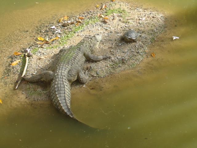 Coronajac pode ser visto no Parque do Córrego grande – Foto: Floram/PMF/Divulgação/ND