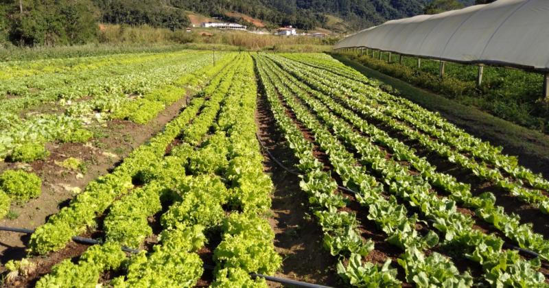 A formação de geada pode impactar negativamente na atividade agrícola e pecuária – Foto: Paulo Rolemberg/ND