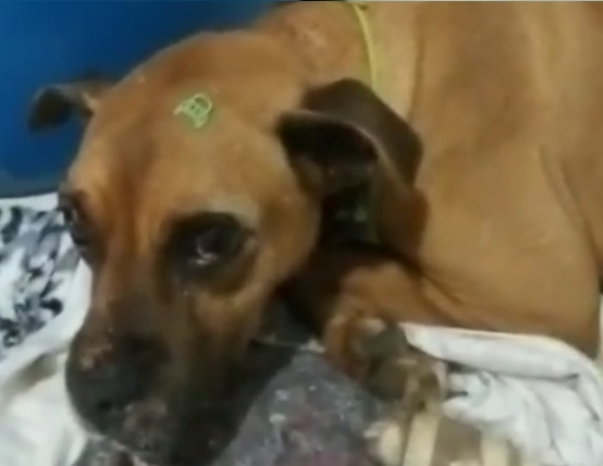Cachorro foi achado em uma vala, com a perna quebrada – Foto: Internet/Reprodução/ND