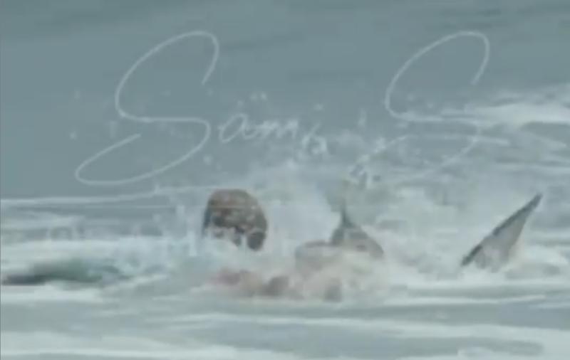 Vídeo flagra momento do ataque do tubarão, que media cerca de 2 metros – Foto: Reprodução