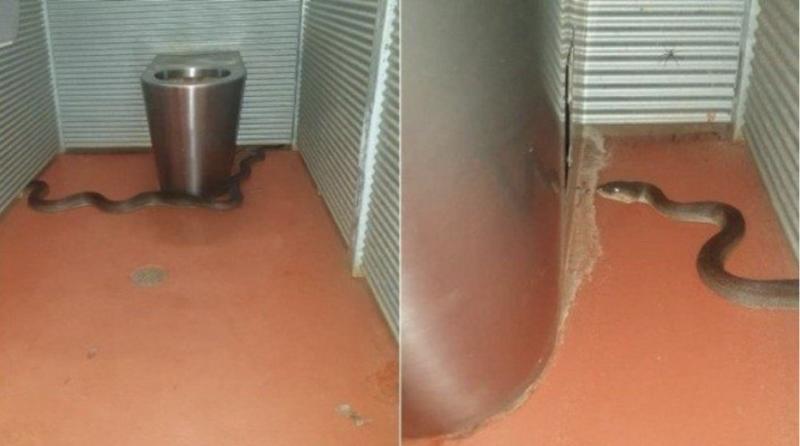 Outro visitante do parque registou a cobra no banheiro – Foto: Reprodução
