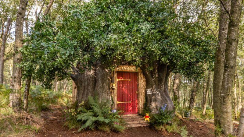 Casa na árvore do Ursinho Pooh está disponível para aluguel na Inglaterra – Foto: Divulgação/Henry Woide/Airbnb