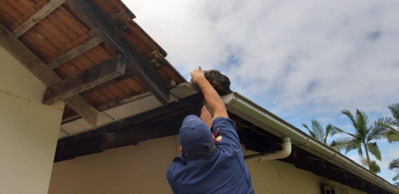 FOTOS: cobra vai parar em telhado de casa e é resgatada por bombeiros em Timbó
