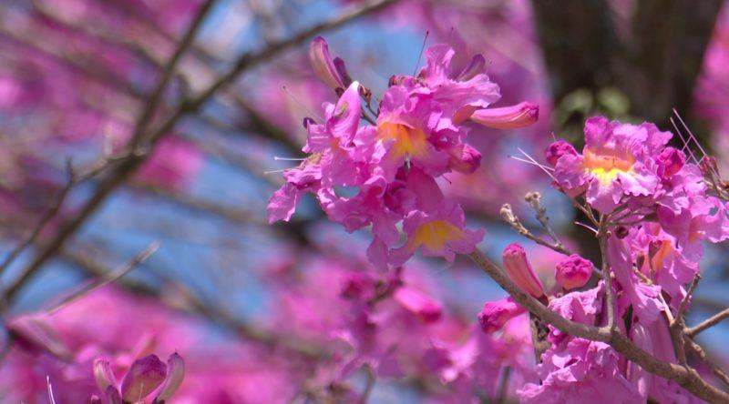 Blumenau e a primavera – Foto: divulgação/NDTV