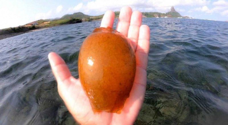 Ovo de tubarão é encontrado em Fernando de Noronha por pescador – Foto: Nego Noronha/ND