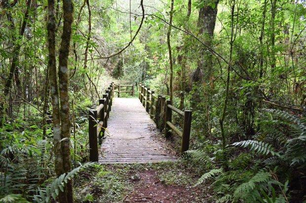 Trilhas de tirar o fôlego são a principal atração do parque – Foto: IMA/Arquivo/Divulgação/ND