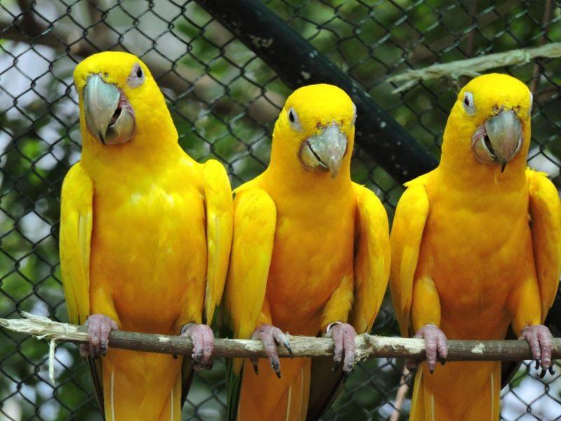 """<span style=""""font-weight: 400;"""">Especialistasentendem que a conservação é uma das melhores ferramentas para administrar os recursos naturais</span>&#8211; Foto: Arquivo/Zoo Pomerode"""