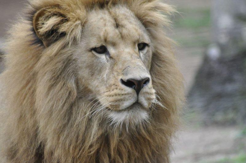 """O Zoo Pomerode <span style=""""font-weight: 400;"""">possui métodos para a preservação da fauna e a flora local</span> &#8211; Foto: Arquivo/Zoo Pomerode"""
