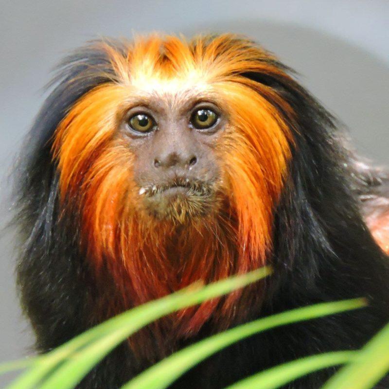 """O Zoo Pomerode tem como objetivo <span style=""""font-weight: 400;"""">proteger a biodiversidade do planeta e evitar a extinção de espécies</span> &#8211; Foto: Arquivo/Zoo Pomerode"""
