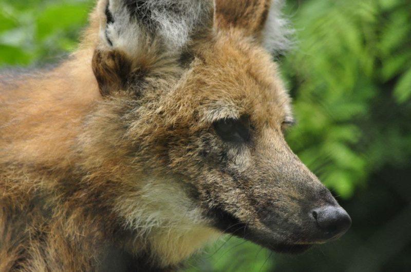 """O Zoo Pomerode realiza <span style=""""font-weight: 400;"""">trabalhos ex situ e contribui também financiando ações in situ, pesquisas e monitoramentos</span> &#8211; Foto: Arquivo/Zoo Pomerode"""