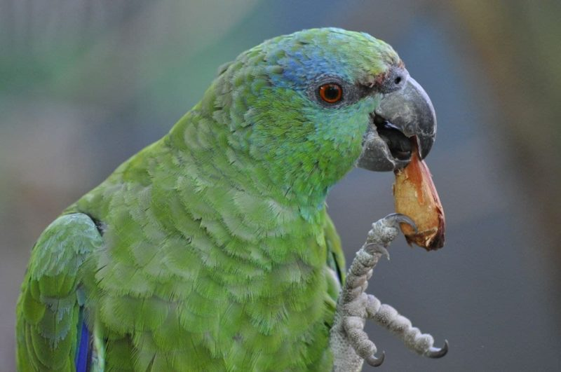 """<span style=""""font-weight: 400;"""">O Zoo Pomerode prioriza a utilização de mudas nativas na arborização dos recintos e passeios</span>&#8211; Foto: Arquivo/Zoo Pomerode"""
