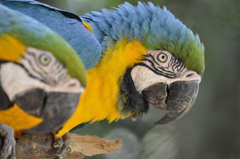 """<span style=""""font-weight: 400;"""">As ações de sustentabilidade instituídas no Zoo Pomerode possibilitam a geração de economia</span>&#8211; Foto: Arquivo/Zoo Pomerode"""