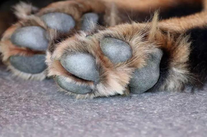 Cachorro foi morto a tiros de espingarda em agosto deste ano – Foto: Pixabay/Divulgação/ND