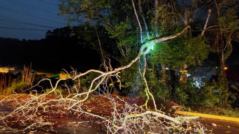 Árvore caída foi retirada pelo Corpo de Bombeiros – Foto: Corpo de Bombeiros/ND