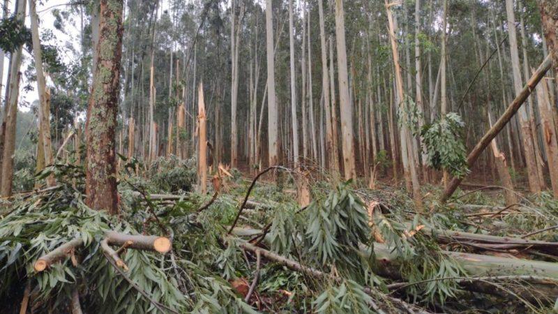 Fotos mostram árvores caídas no interior — Foto: Belos FM/Divulgação/ND