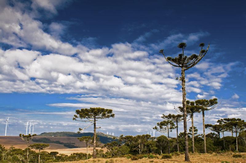 Le centrali eoliche contrastano con le piante di Bom Jardim da Serra & # 8211;  Foto: (Marquito/Santor)