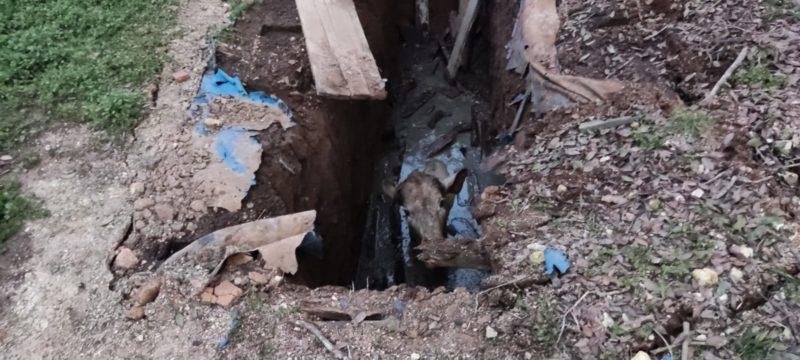 Animal caiu dentro de fossa após tampa quebrar – Foto: 9BBM/Divulgação/ND